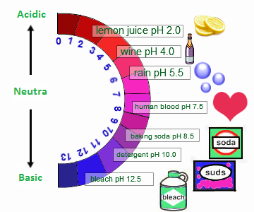Acids And BasesRadix Tree Online Tutoring & Training Services
