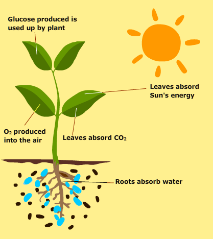 light-and-photosynthesis
